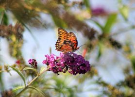 summer butterfly by flowersteph