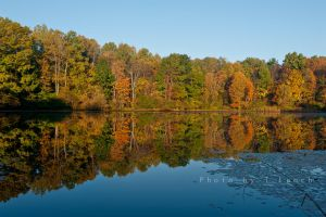 Morning Reflections by tleach0608