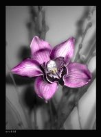 Orchid and Pussywillows by samaya1974