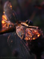 Wing of a Dragonfly by DeingeL