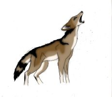 Coyote Study Colored by Chardove