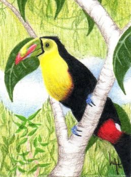 Keel Billed Toucan by Madmystyk