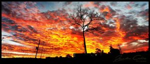 One tree sunset ultra wide by jaydoncabe