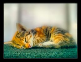 The cat by AzPhotographer