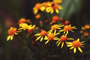 Autumn Flowers 2 by Year-Of-The-Cat-Girl