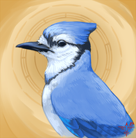 Blue Jay by smokewithoutmirrors