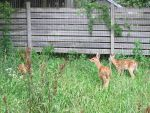 Spot the Fawns by Windthin