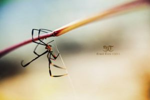 'Webspinner' by erwintirta