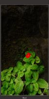 Solitary Red by MarcWasHere