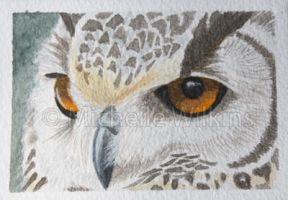 Bengal eagle owl ACEO by DragonsDust