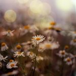 in beautiful september.. by Preludium