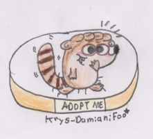 Baby Rigby in adoption :3 by Krys-DamianiFoo