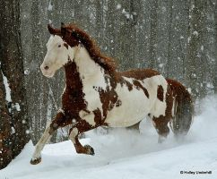Into the snow. by ThunderhillPaints