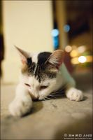 A Cat's Night Life I - 06 by shiroang