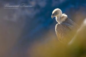 Portrait of a bird... by vincentfavre