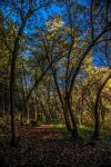 A Walk For The Senses by Ericseye