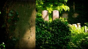 Old Jewish Cemetery in Wroclaw (Poland) by OkeMani