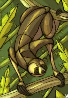 Animals - sloth by Equattro