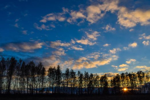Sunset in the forest by stas-gavrik