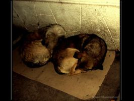 Homeless dogs by freyaddicted