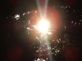 Late Spring Sun by Pentacle5