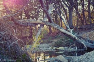 Creek Bed by colezombie