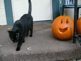 Bobby and the Pumpkin by flourpie