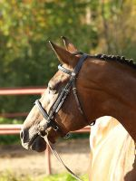Trakehner mare by wakedeadman
