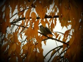 little sparrow in a golden tree by mysteriousfantasy