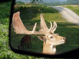 buck vision by jahendrick
