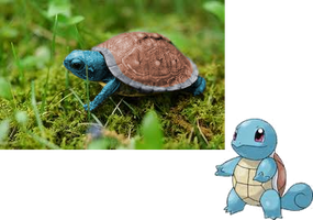 Real Life Squirtle by RedMudkip