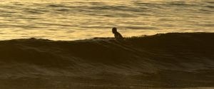 Waiting for the last wave of the day by Axel-Haudiquet