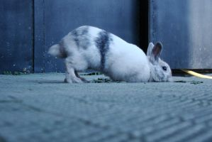 Ancord the rabbit 18 by Panopticon-Stock