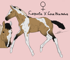 Foal Lequoia X Love like nature by RisingAngelss