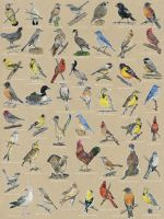 State Birds Compilation with States and Names by M-Everham