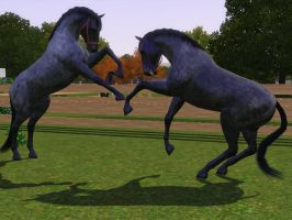 Sims 3 Horse Marking Download: RoanPack1 by Isolated-Design