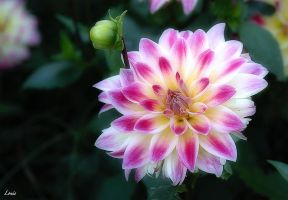 Flower by Louis-photos