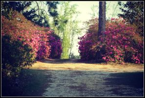 Driveway by sentry-sight