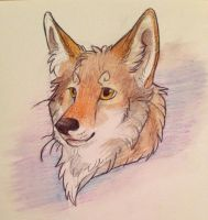 Coyote headshot by Maarkis