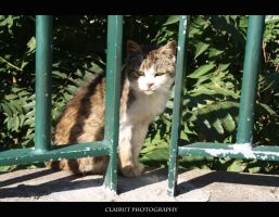 Homeless cat by ClairutPhotography