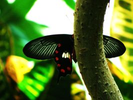 Tropic Butterfly by ColdEdge