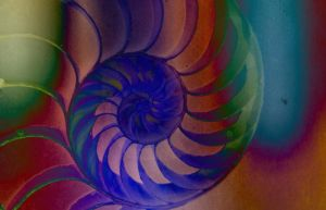 Nature's Spiral by Sherjaxon