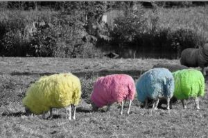 technicolor sheep coat by Spree5326