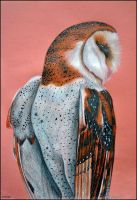 Barn owl by Verenique