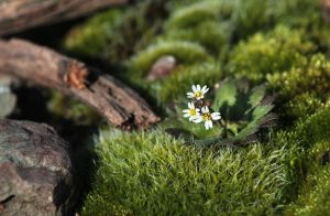 mossy by Sigyn85