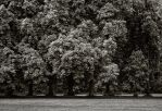 Chestnut Trees in the Rain by vamosver