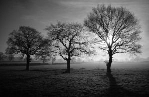 Trees and Sunlight (B and W) by masimage