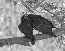 Two Crows by Les-Piccolo