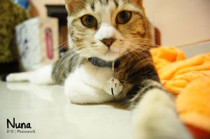 Cat Selfies by dianapple