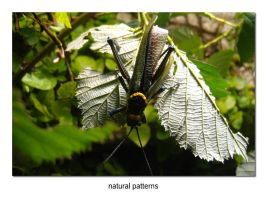 natural patterns by lordmaci